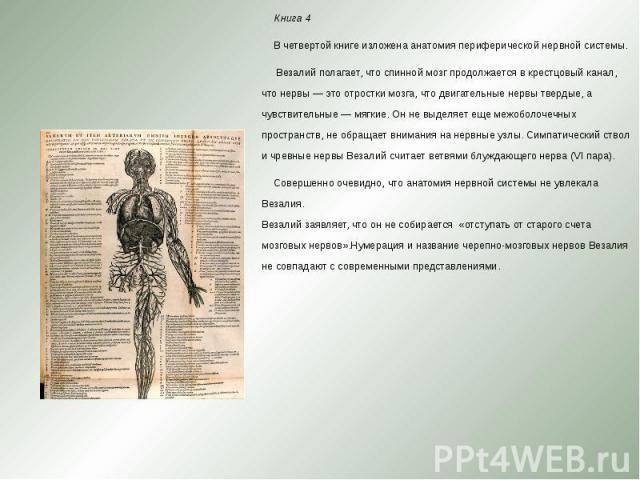 Книга 4 Книга 4 В четвертой книге изложена анатомия периферической нервной системы. Везалий полагает, что спинной мозг продолжается в крестцовый канал, что нервы — это отростки мозга, что двигательные нервы твердые, а чувствительные — мя…