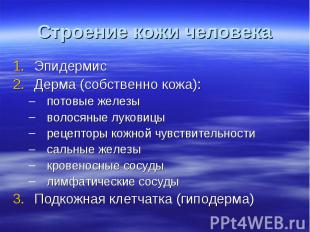Строение кожи человека Эпидермис Дерма (собственно кожа): потовые железы волосян