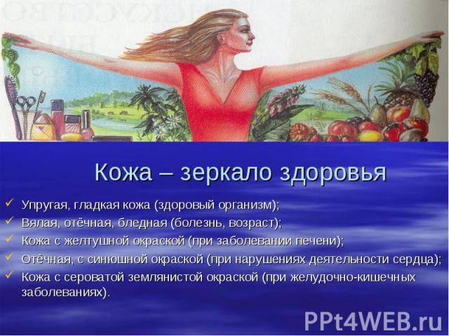 Кожа – зеркало здоровья Упругая, гладкая кожа (здоровый организм); Вялая, отёчная, бледная (болезнь, возраст); Кожа с желтушной окраской (при заболевании печени); Отёчная, с синюшной окраской (при нарушениях деятельности сердца); Кожа с сероватой зе…