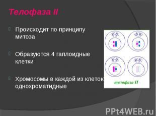 Происходит по принципу митоза Происходит по принципу митоза Образуются 4 гаплоид