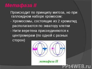Происходит по принципу митоза, но при гаплоидном наборе хромосом: Происходит по