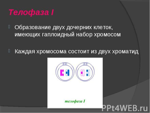 Образование двух дочерних клеток, имеющих гаплоидный набор хромосом Образование двух дочерних клеток, имеющих гаплоидный набор хромосом Каждая хромосома состоит из двух хроматид