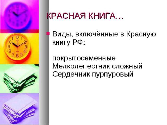КРАСНАЯ КНИГА… Виды, включённые в Красную книгу РФ: покрытосеменные Мелколепестник сложный Сердечник пурпуровый
