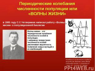 Периодические колебания численности популяции или «ВОЛНЫ ЖИЗНИ» в 1905 году С.С.