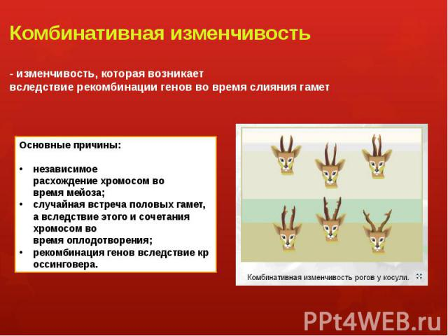 Комбинативная изменчивость - изменчивость, которая возникает вследствиерекомбинациигенов во время слияниягамет