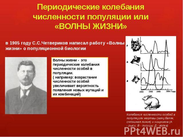 Периодические колебания численности популяции или «ВОЛНЫ ЖИЗНИ» в 1905 году С.С.Четвериков написал работу «Волны жизни» о популяционной биологии