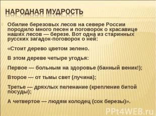 Обилие березовых лесов на севере России породило много песен и поговорок о краса