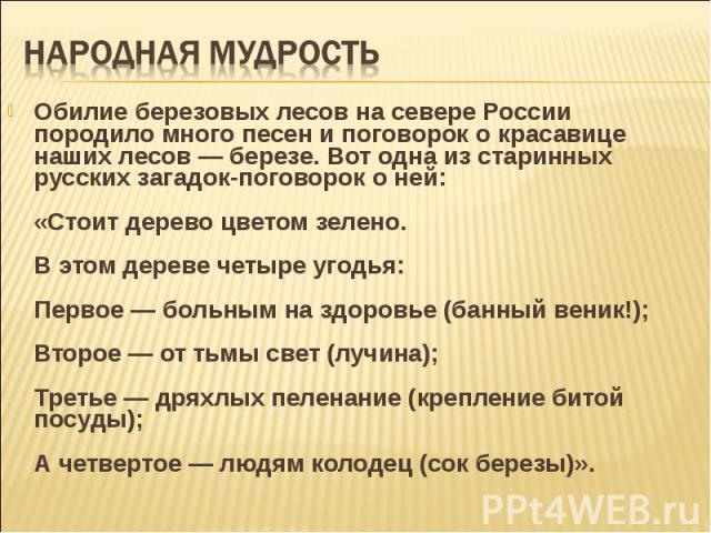 Обилие березовых лесов на севере России породило много песен и поговорок о красавице наших лесов — березе. Вот одна из старинных русских загадок-поговорок о ней: «Стоит дерево цветом зелено. В этом дереве четыре угодья: Первое — больным на здоровье …