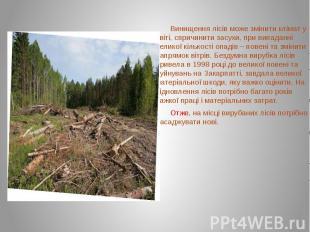 Винищення лісів може змінити клімат у світі, спричинити засухи, при випаданні ве