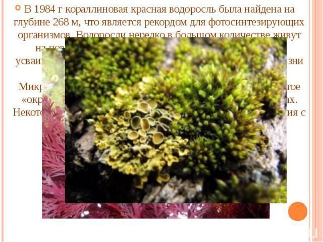 В 1984 г кораллиновая красная водоросль была найдена на глубине 268 м, что является рекордом для фотосинтезирующих организмов. Водоросли нередко в большом количестве живут на поверхности и в верхних слоях почвы, одни из них усваивают атмосферный азо…