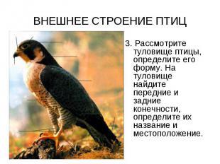 ВНЕШНЕЕ СТРОЕНИЕ ПТИЦ 3. Рассмотрите туловище птицы, определите его форму. На ту