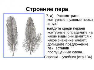 Строение пера 7. а) Рассмотрите контурные, пуховые перья и пух; найдите среди пе