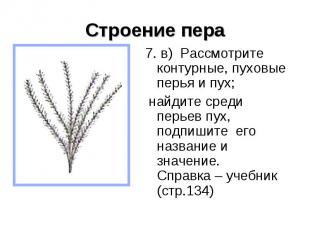 Строение пера 7. в) Рассмотрите контурные, пуховые перья и пух; найдите среди пе
