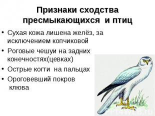 Признаки сходства пресмыкающихся и птиц Сухая кожа лишена желёз, за исключением