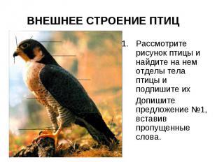 ВНЕШНЕЕ СТРОЕНИЕ ПТИЦ Рассмотрите рисунок птицы и найдите на нем отделы тела пти