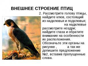 ВНЕШНЕЕ СТРОЕНИЕ ПТИЦ 2. Рассмотрите голову птицы, найдите клюв, состоящий из на