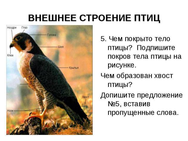 ВНЕШНЕЕ СТРОЕНИЕ ПТИЦ 5. Чем покрыто тело птицы? Подпишите покров тела птицы на рисунке. Чем образован хвост птицы? Допишите предложение №5, вставив пропущенные слова.