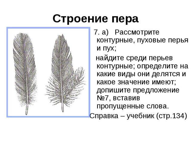 Строение пера 7. а) Рассмотрите контурные, пуховые перья и пух; найдите среди перьев контурные; определите на какие виды они делятся и какое значение имеют; допишите предложение №7, вставив пропущенные слова. Справка – учебник (стр.134)