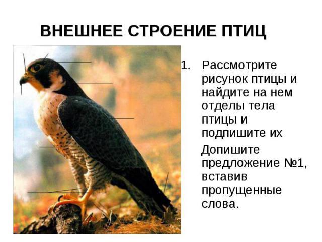 ВНЕШНЕЕ СТРОЕНИЕ ПТИЦ Рассмотрите рисунок птицы и найдите на нем отделы тела птицы и подпишите их Допишите предложение №1, вставив пропущенные слова.