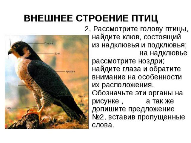 ВНЕШНЕЕ СТРОЕНИЕ ПТИЦ 2. Рассмотрите голову птицы, найдите клюв, состоящий из надклювья и подклювья; на надклювье рассмотрите ноздри; найдите глаза и обратите внимание на особенности их расположения. Обозначьте эти органы на рисунке , а так же допиш…