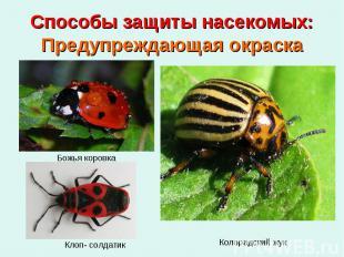Способы защиты насекомых: Предупреждающая окраска