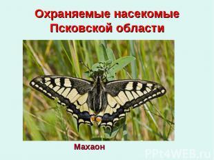 Охраняемые насекомые Псковской области