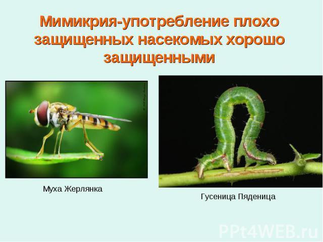 Мимикрия-употребление плохо защищенных насекомых хорошо защищенными