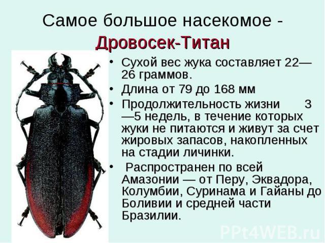 Самое большое насекомое - Дровосек-Титан Сухой вес жука составляет 22—26 граммов. Длина от 79 до 168 мм Продолжительность жизни 3—5 недель, в течение которых жуки не питаются и живут за счет жировых запасов, накопленных на стадии личинки. Распростра…