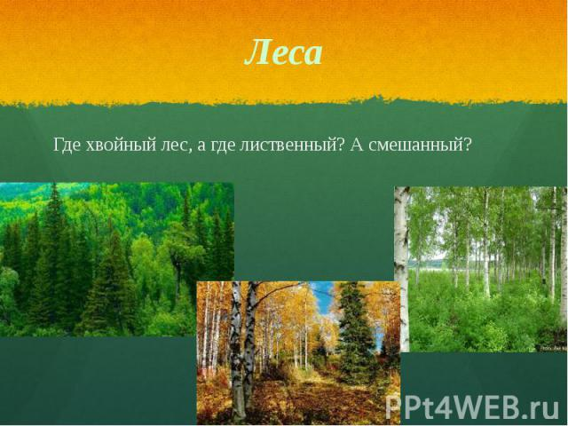 Леса Где хвойный лес, а где лиственный? А смешанный?