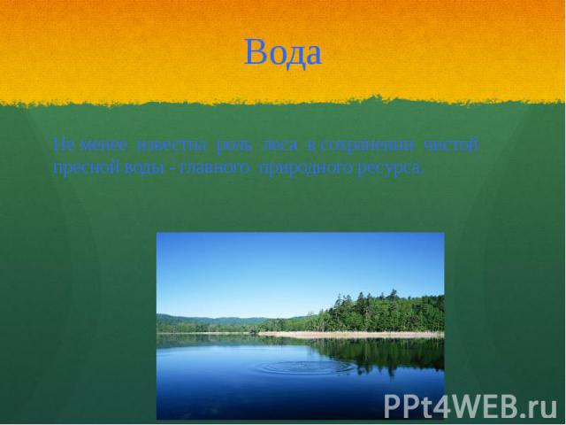 Вода Не менее известна роль леса в сохранении чистой пресной воды - главного природного ресурса.