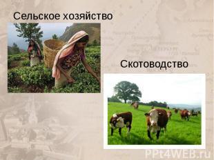 Скотоводство Сельское хозяйство