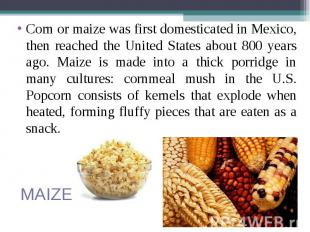 Corn or maize was first domesticated in Mexico, then reached the United States a