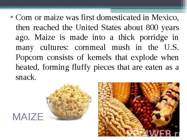 Corn or maize was first domesticated in Mexico, then reached the United States about 800 years ago. Maize is made into a thick porridge in many cultures: cornmeal mush in the U.S. Popcorn consists of kernels that explode when heated, forming fluffy …