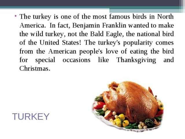 The turkey is one of the most famous birds in North America. In fact, Benjamin Franklin wanted to make the wild turkey, not the Bald Eagle, the national bird of the United States! The turkey's popularity comes from the American people's love of eati…