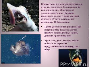 Вважається, що химери харчуються дуже твердою їжею (молюсками чи голкошкірими).