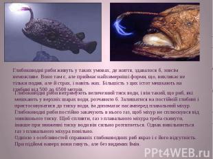Глибоководні риби живуть у таких умовах, де життя, здавалося б, зовсім неможливе