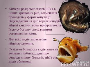 Химери роздільностатеві. Як і в інших хрящових риб, осіменіння проходить у формі