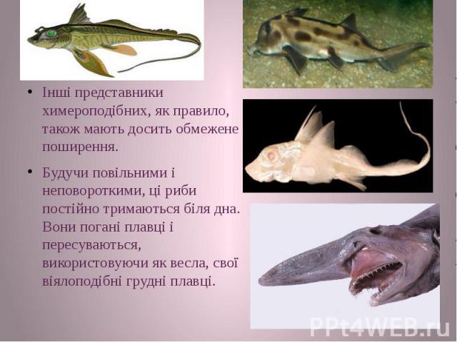 Інші представники химероподібних, як правило, також мають досить обмежене поширення. Інші представники химероподібних, як правило, також мають досить обмежене поширення. Будучи повільними і неповороткими, ці риби постійно тримаються біля дна. Вони п…