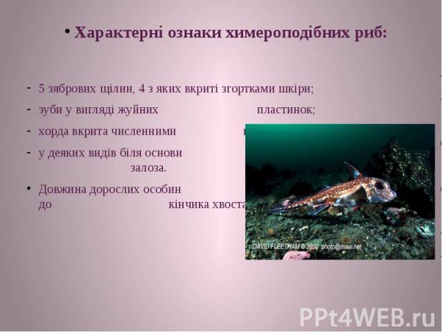Характерні ознаки химероподібних риб: 5 зябрових щілин, 4 з яких вкриті згортками шкіри; зуби у вигляді жуйних пластинок; хорда вкрита численними вапняковими кільцями. у деяких видів біля основи спинного шипа є отруйна залоза. Довжина дорослих особи…