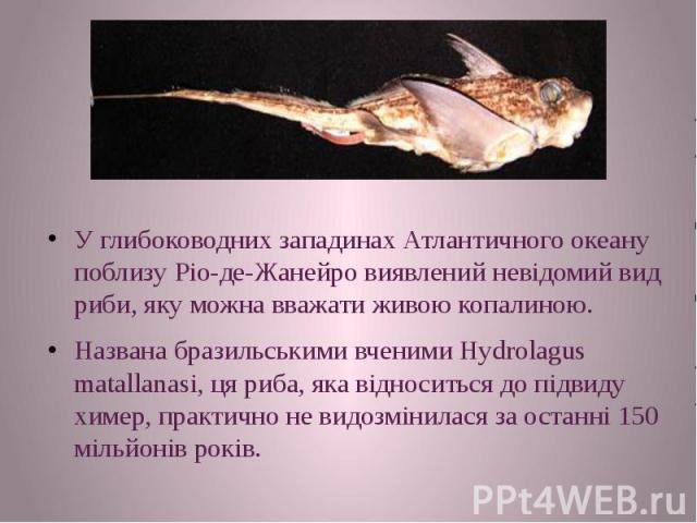 У глибоководних западинах Атлантичного океану поблизу Ріо-де-Жанейро виявлений невідомий вид риби, яку можна вважати живою копалиною. У глибоководних западинах Атлантичного океану поблизу Ріо-де-Жанейро виявлений невідомий вид риби, яку можна вважат…