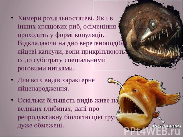 Химери роздільностатеві. Як і в інших хрящових риб, осіменіння проходить у формі копуляції. Відкладаючи на дно веретеноподібні яйцеві капсули, вони прикріплюють їх до субстрату спеціальними роговими нитками. Химери роздільностатеві. Як і в інших хря…