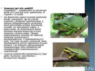 Земново дні або амфібії (Amphibia)— найменший за кількістю видів (3-4 тися