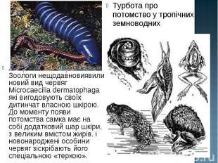Амеріканскі та британські Зоологи нещодавновиявили новий вид червяг Microcaecili