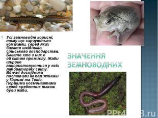 Усі земноводні корисні, тому що харчуються комахами, серед яких багато шкідників