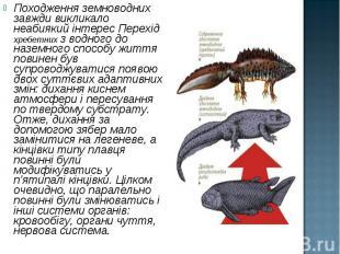 Походження земноводних завжди викликало неабиякий інтерес Перехід хребетних з во