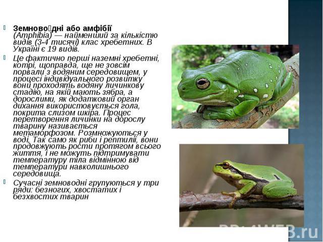 Земново дні або амфібії (Amphibia)— найменший за кількістю видів (3-4 тисячі) клас хребетних. В Україні є 19 видів. Земново дні або амфібії (Amphibia)— найменший за кількістю видів (3-4 тисячі) клас хребетних. В Україні є 19 видів. Це фа…