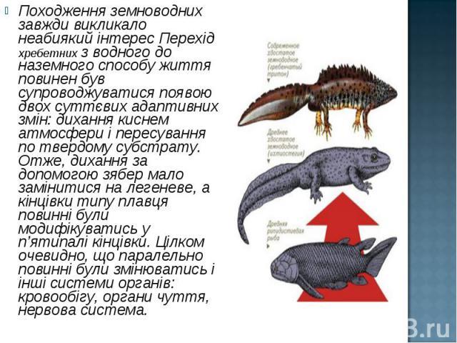 Походження земноводних завжди викликало неабиякий інтерес Перехід хребетних з водного до наземного способу життя повинен був супроводжуватися появою двох суттєвих адаптивних змін: дихання киснем атмосфери і пересування по твердому субстрату. Отже, д…