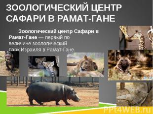 Зоологический центр Сафари в Рамат-Гане— первый по величинезоологиче