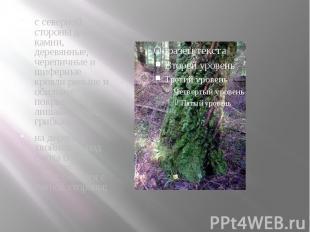 с северной стороны деревья, камни, деревянные, черепичные и шиферные кровли рань