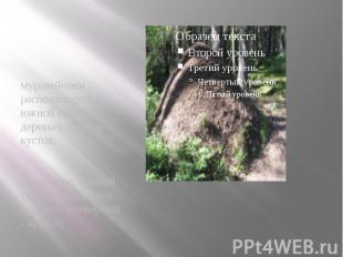 муравейники располагаются с южной стороны деревьев, пней и кустов; муравейники р